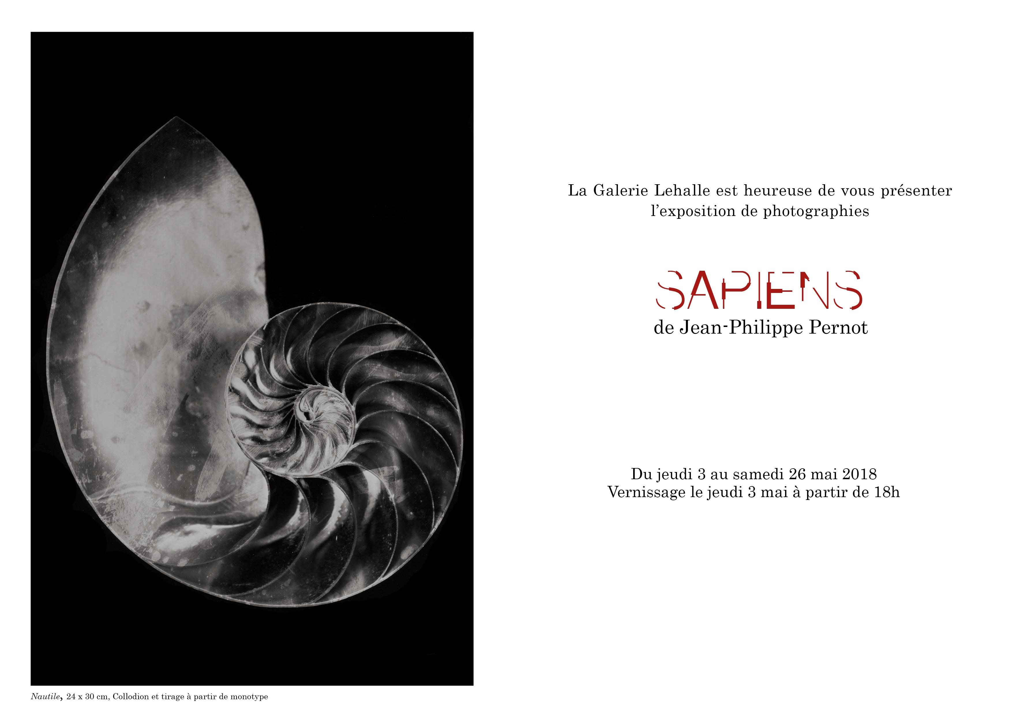 Jean-Philippe Pernot Nautile, 24 x 30 cm, Collodion et tirage à partir de monotype